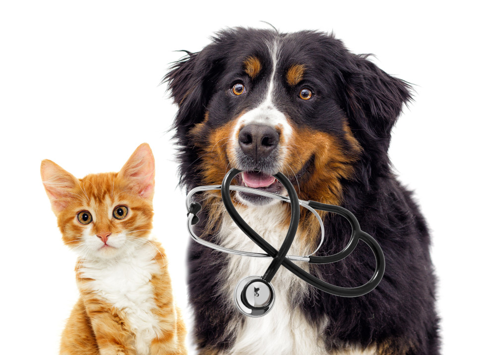 Packaging Professionals - Veterinary and Pet Care